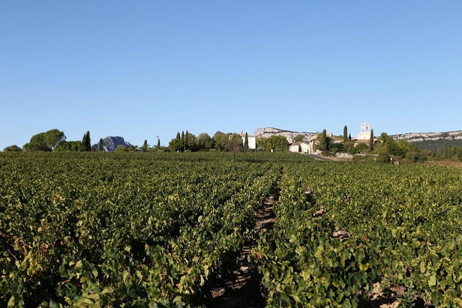 Vieux carignan Chateau de Lancyre AOC Coteaux du Languedoc Pic Saint Loup