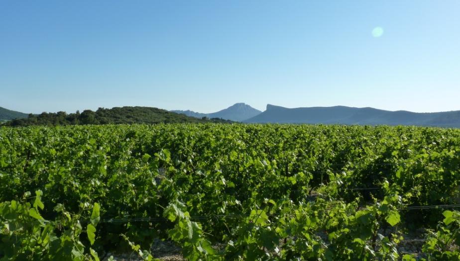 Charbonniere Syrah Chateau de Lancyre AOC Coteaux de Languedoc Pic Saint Loup