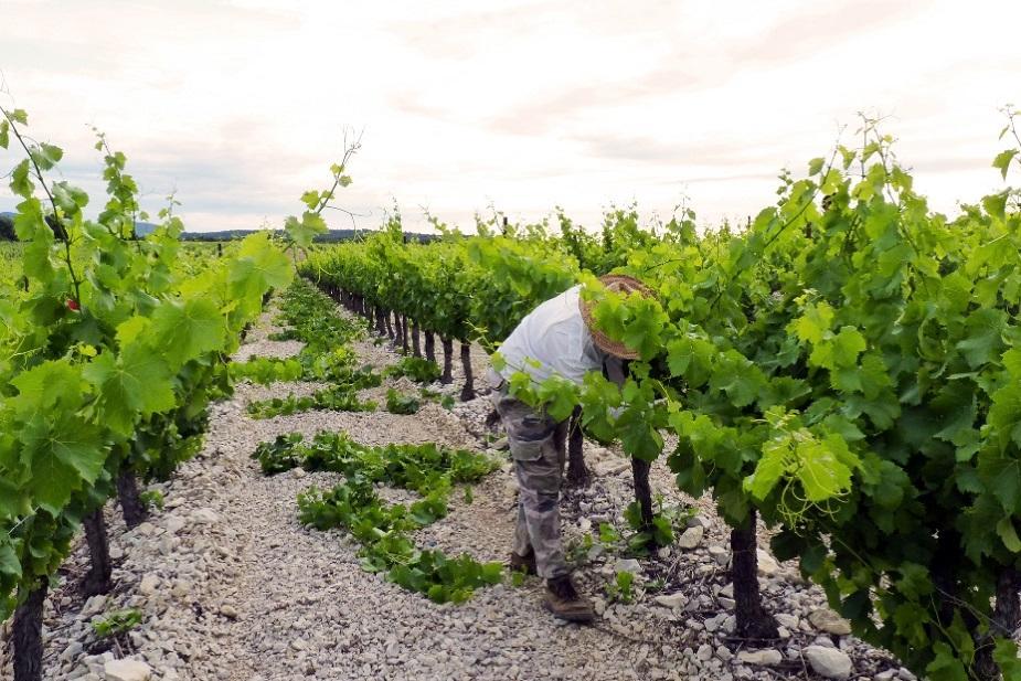 Clearing up Chateau de Lancyre AOC Coteaux du Languedoc Pic Saint Loup