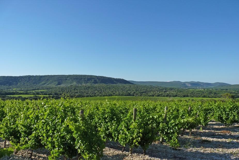 Grenache Chateau de Lancyre AOC Coteaux du Languedoc Pic Saint Loup