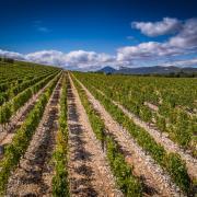 Un vignoble d'exception au coeur du Pic Saint-Loup